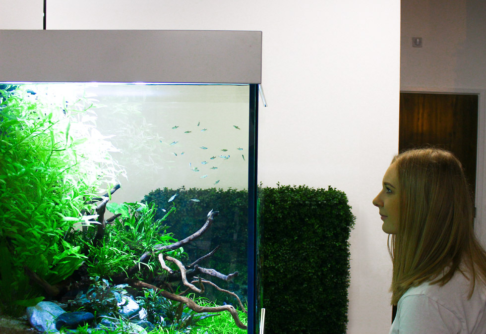 Study of biophilic design in the workplace with office based aquarium by ViDERE