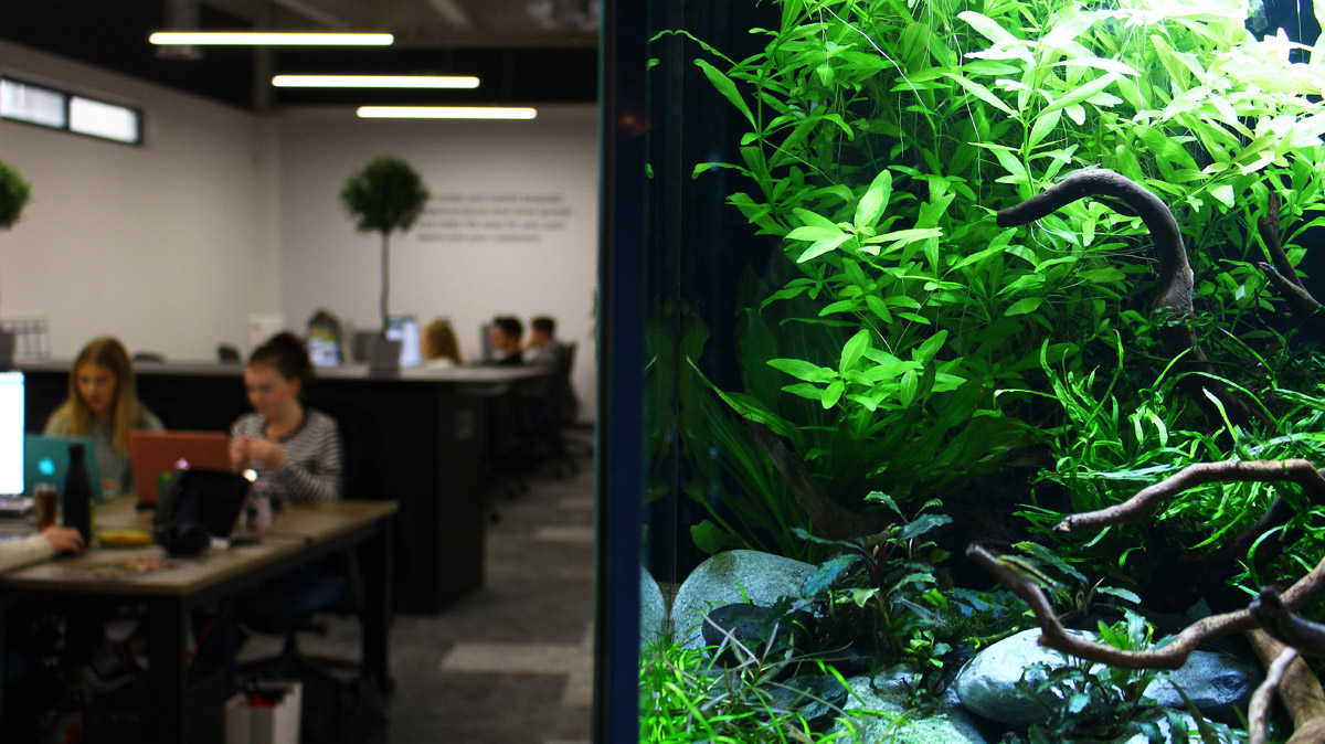 Biophilic design in the workplace with office based aquarium by ViDERE