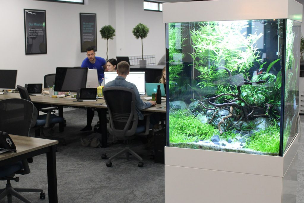 Studying the Therapeutic Impact of Aquariums & Biophilic Design in the Office