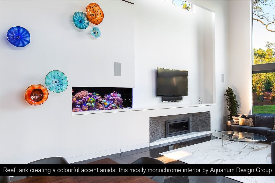 Small Aquariums For Small Spaces