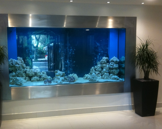 Considerations of Hygiene and Aquarium Design
